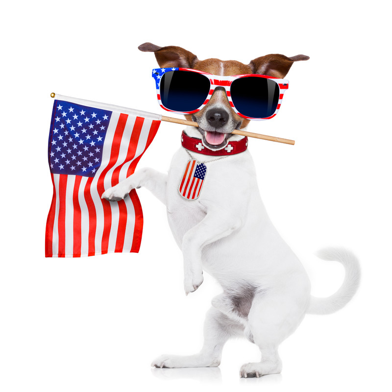 Introduction to American culture funny dog with flag